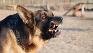 бойца АТО загрызли собаки