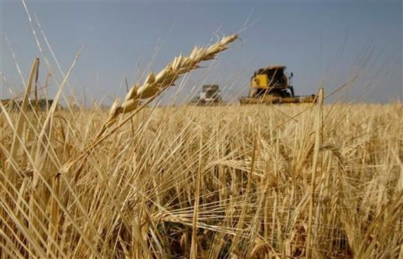 рынки сбыта зерна России