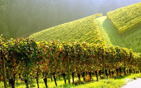 очищение почвы от пестицидов