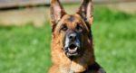 На Киевщине собака помогла найти убийцу