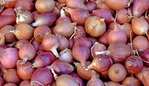луковицы для посадки